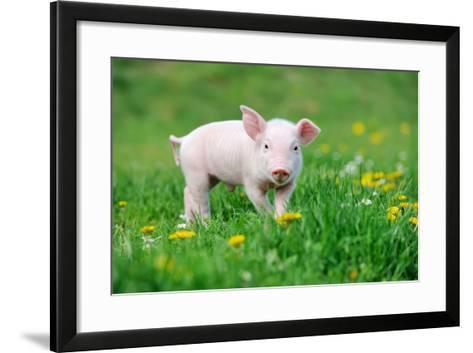 Young Funny Pig on a Spring Green Grass-Volodymyr Burdiak-Framed Art Print