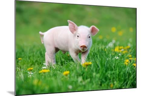 Young Funny Pig on a Spring Green Grass-Volodymyr Burdiak-Mounted Photographic Print