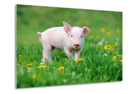 Young Funny Pig on a Spring Green Grass-Volodymyr Burdiak-Metal Print