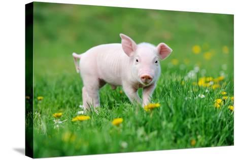 Young Funny Pig on a Spring Green Grass-Volodymyr Burdiak-Stretched Canvas Print