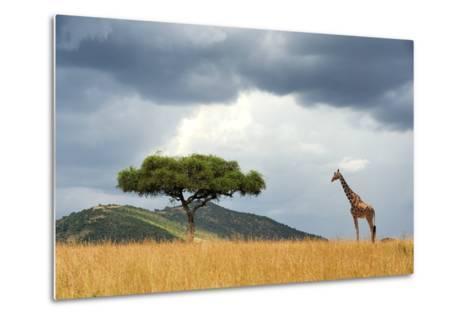 Beautiful Landscape with Nobody Tree and Gireffe in Africa-Volodymyr Burdiak-Metal Print