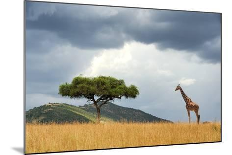 Beautiful Landscape with Nobody Tree and Gireffe in Africa-Volodymyr Burdiak-Mounted Photographic Print