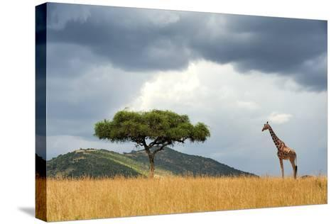Beautiful Landscape with Nobody Tree and Gireffe in Africa-Volodymyr Burdiak-Stretched Canvas Print