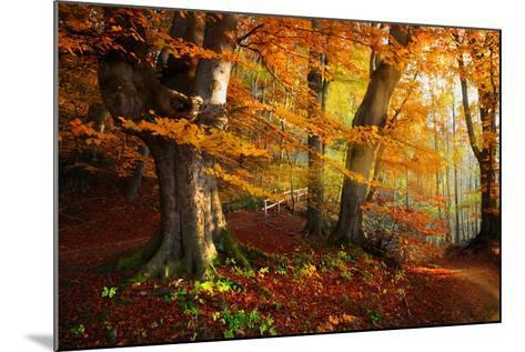 Landscape Nice Fantasy Forest with Creek in a Golden Autumn. Wall-Poster Idea.- S Castelli-Mounted Photographic Print