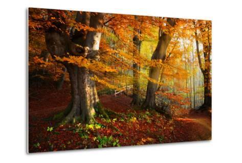 Landscape Nice Fantasy Forest with Creek in a Golden Autumn. Wall-Poster Idea.- S Castelli-Metal Print