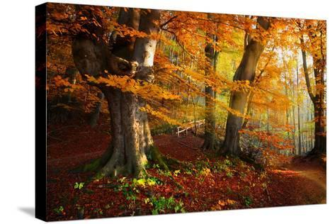 Landscape Nice Fantasy Forest with Creek in a Golden Autumn. Wall-Poster Idea.- S Castelli-Stretched Canvas Print