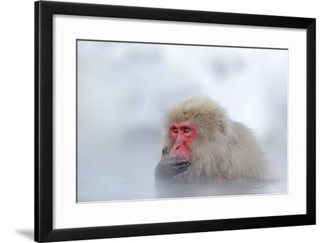 Monkey Japanese Macaque, Macaca Fuscata, Red Face Portrait in the Cold Water with Fog and Snow, Han-Ondrej Prosicky-Framed Art Print