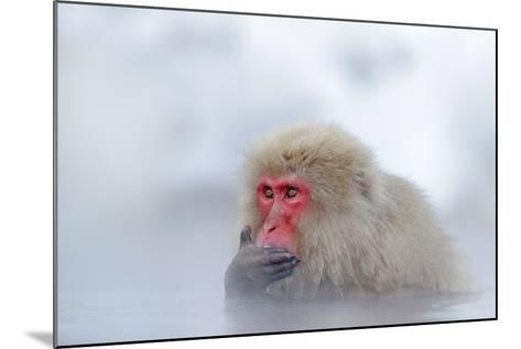 Monkey Japanese Macaque, Macaca Fuscata, Red Face Portrait in the Cold Water with Fog and Snow, Han-Ondrej Prosicky-Mounted Photographic Print