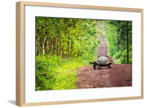 Galapagos Giant Tortoise Crossing Straight Dirt Road- nwdph-Framed Art Print