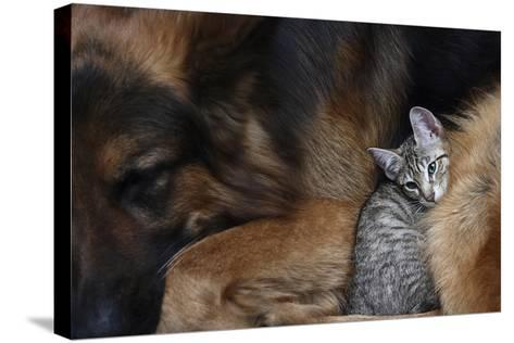 Large Dog and a Cat.-Valentina Razumova-Stretched Canvas Print
