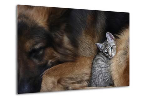 Large Dog and a Cat.-Valentina Razumova-Metal Print