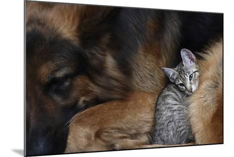Large Dog and a Cat.-Valentina Razumova-Mounted Photographic Print