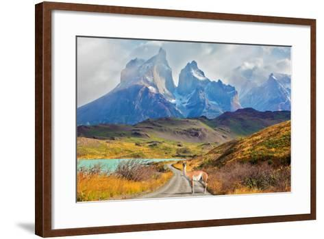 Majestic Peaks of Los Kuernos over Lake Pehoe. on a Dirt Road is worth Guanaco - Lama. the National-kavram-Framed Art Print