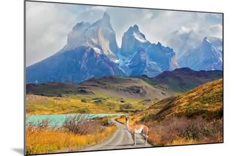Majestic Peaks of Los Kuernos over Lake Pehoe. on a Dirt Road is worth Guanaco - Lama. the National-kavram-Mounted Photographic Print