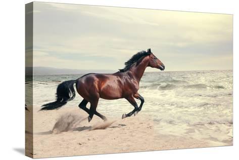 Wonderful Marine Landscape with Beautiful Bay Horse- anakondasp-Stretched Canvas Print
