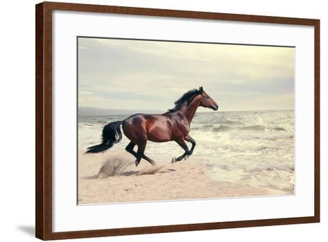 Wonderful Marine Landscape with Beautiful Bay Horse- anakondasp-Framed Art Print