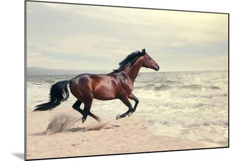 Wonderful Marine Landscape with Beautiful Bay Horse- anakondasp-Mounted Photographic Print