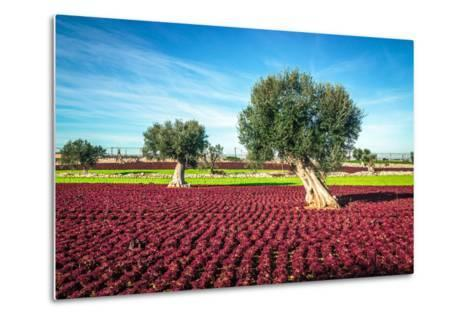 The Beautiful and Colorful Landscapes in Puglia-Sabino Parente-Metal Print