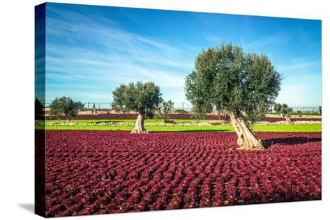 The Beautiful and Colorful Landscapes in Puglia-Sabino Parente-Stretched Canvas Print