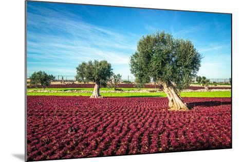 The Beautiful and Colorful Landscapes in Puglia-Sabino Parente-Mounted Photographic Print