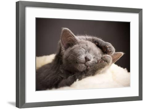 Kitten Sleeping, Russian Blue Cat.-Gita Kulinitch Studio-Framed Art Print