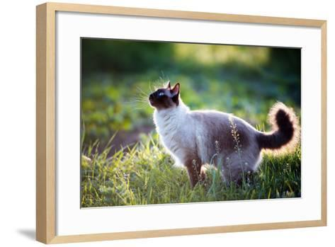 The Beautiful Brown Cat, Siamese, with Blue-Green Eyes Lies in a Green Grass and Leaves-Bershadsky Yuri-Framed Art Print