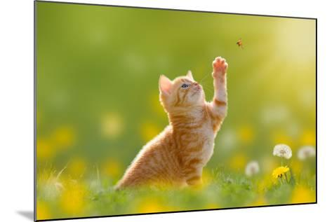 Young Cat / Kitten Hunting a Ladybug with Back Lit- Photo-SD-Mounted Photographic Print