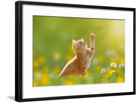 Young Cat / Kitten Hunting a Ladybug with Back Lit- Photo-SD-Framed Art Print