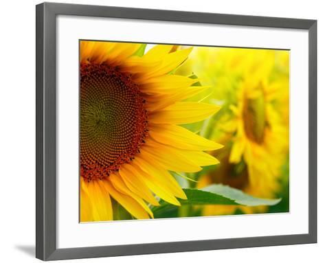 Sunflowers-SJ Travel Photo and Video-Framed Art Print