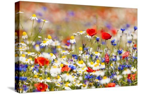Abundance of Blooming Wild Flowers on the Meadow at Spring Time- courtyardpix-Stretched Canvas Print