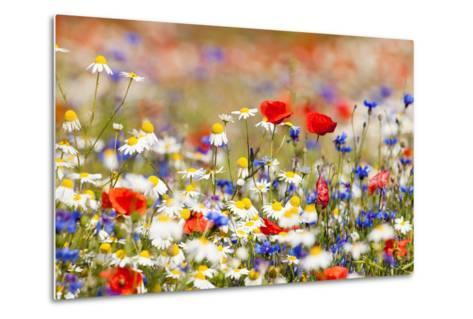 Abundance of Blooming Wild Flowers on the Meadow at Spring Time- courtyardpix-Metal Print