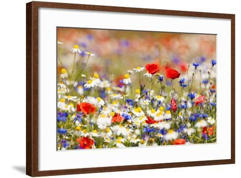 Abundance of Blooming Wild Flowers on the Meadow at Spring Time- courtyardpix-Framed Art Print