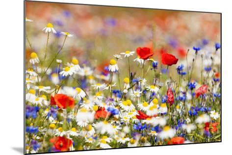 Abundance of Blooming Wild Flowers on the Meadow at Spring Time- courtyardpix-Mounted Photographic Print