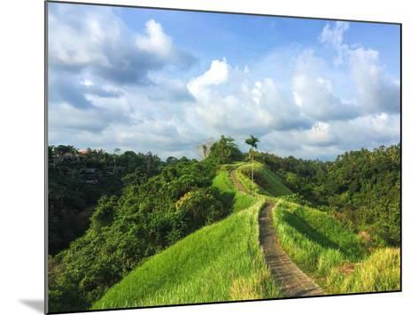 Idyllic Walking Path on Top of Green Hills. Tropical Nature Scene. Narrow Path in Rice Fields. Exot-Davdeka-Mounted Photographic Print