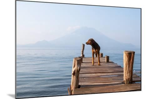 Landscape with a Dog on a Pier by the Lake.-Tati Nova photo Mexico-Mounted Photographic Print