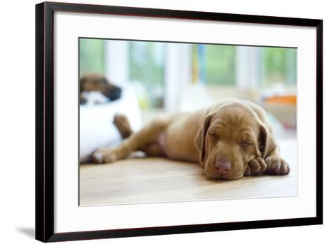 Cute Little Rhodesian Ridgeback Puppy Sleeping on the Ground. the Little Dogs are Four Weeks of Age-nancy dressel-Framed Art Print