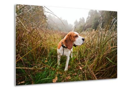 Hunting Dog in the Foggy Morning in Forest-Igor Normann-Metal Print