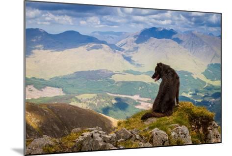 Dog Looking at Epic View from Scottish Munro, Ben Starav.-Chris G Walker-Mounted Photographic Print