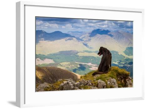 Dog Looking at Epic View from Scottish Munro, Ben Starav.-Chris G Walker-Framed Art Print