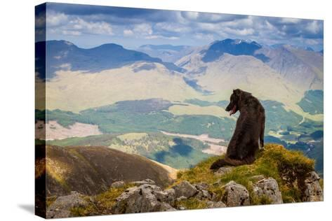 Dog Looking at Epic View from Scottish Munro, Ben Starav.-Chris G Walker-Stretched Canvas Print