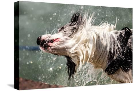 Shaking Dog- FeSeven-Stretched Canvas Print