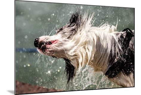 Shaking Dog- FeSeven-Mounted Photographic Print