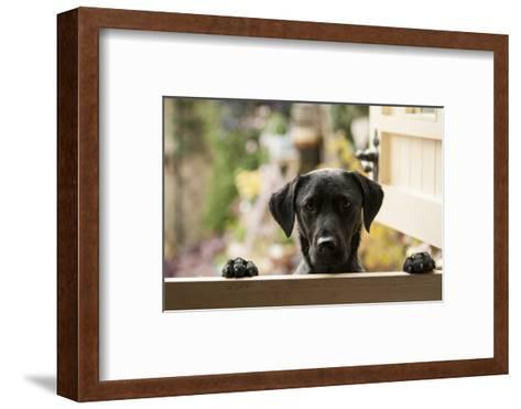 Black Labrador-claire norman-Framed Art Print