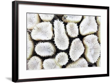 Close-Up of White Coral- StockHouse-Framed Art Print