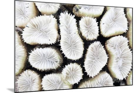 Close-Up of White Coral- StockHouse-Mounted Photographic Print