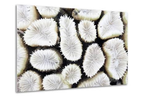 Close-Up of White Coral- StockHouse-Metal Print