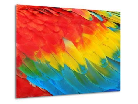 Parrot Feathers, Red and Blue Exotic Texture- Edelwipix-Metal Print