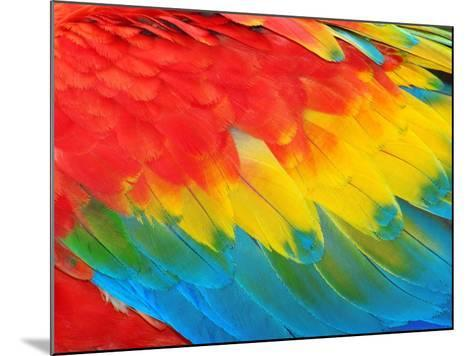 Parrot Feathers, Red and Blue Exotic Texture- Edelwipix-Mounted Photographic Print