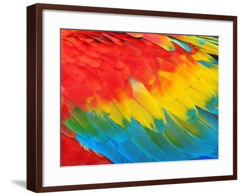 Parrot Feathers, Red and Blue Exotic Texture- Edelwipix-Framed Art Print