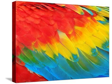 Parrot Feathers, Red and Blue Exotic Texture- Edelwipix-Stretched Canvas Print
